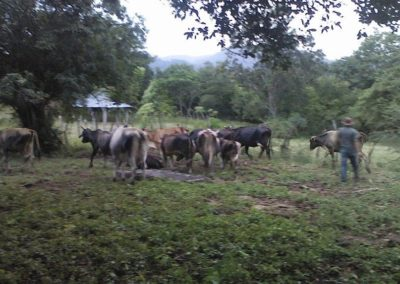 IMI 2015 30 + Heard Cows