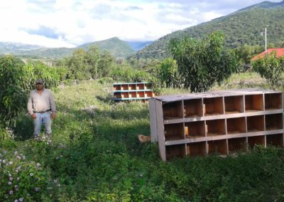 IMI 2015 More Than 3300 Fruit Trees
