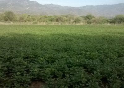 Lush Acres